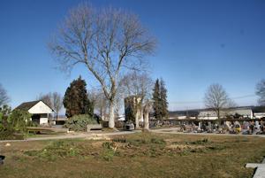 Baumfällung am Friedhof